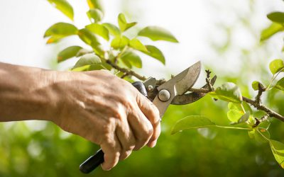 Why Pruning Your Portfolio is Prudent